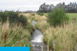 Stream and bushes - Ashburton Lyndhurst Irrigation Limited